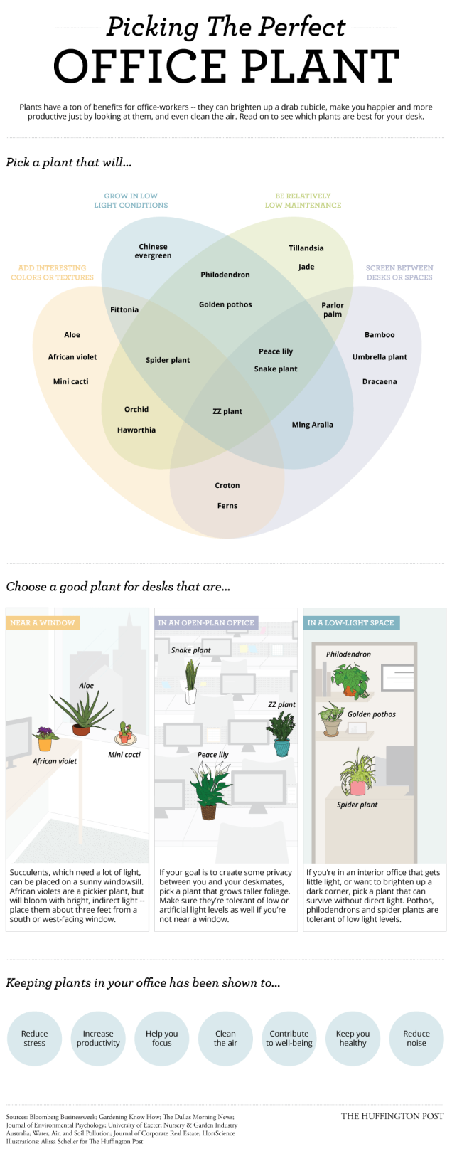 Picking the perfect office plant.